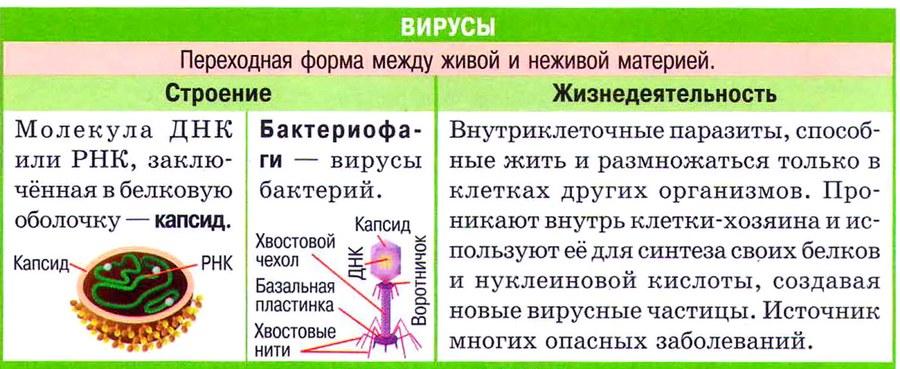 НЕКЛЕТОЧНЫЕ. Вирусы и фаги
