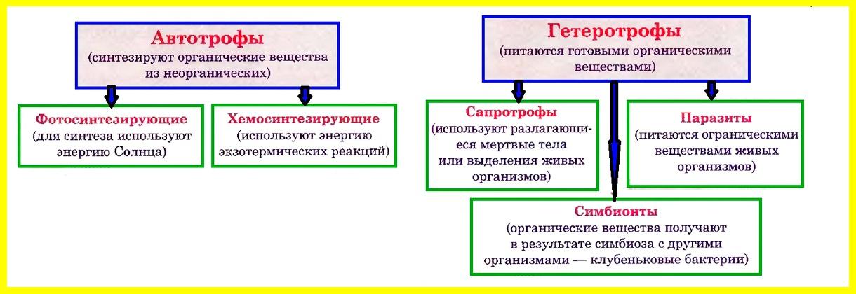 Прокариоты. ЦАРСТВО БАКТЕРИИ