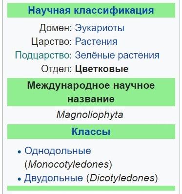 покрытосеменные